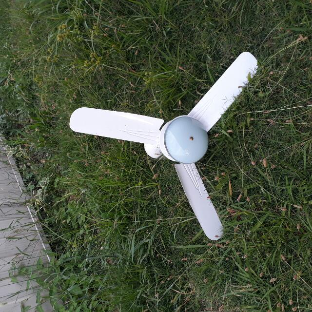 Single Light Ceiling Fan