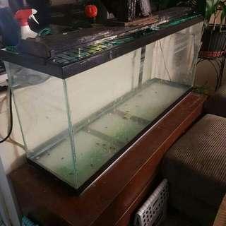 Fish Tank $0