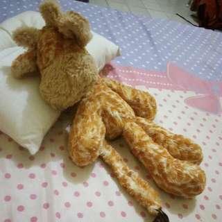 Giraffe-jelly cat