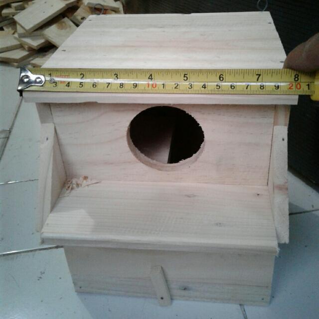 Gambar Ukuran Glodok Lovebird