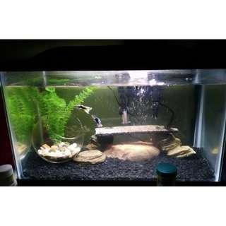 10 gallon fish tank Marineland