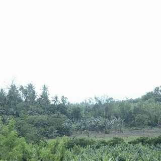 3.3 Hectares raw lot for sale