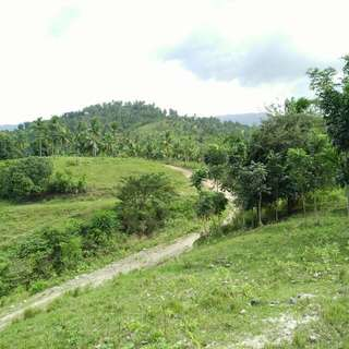 Very Affordable 14 Hectares Lot @ 200/sq.m. only Located At Balamban Cebu