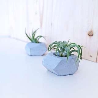 Concrete Planter: Tiny Duo With Air Plant