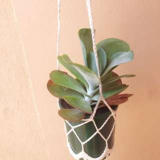 Hand Made Plant Hanger