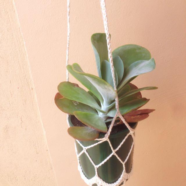 Hand Made Plant Hanger