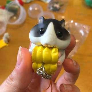 抱著玉米的倉鼠