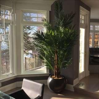 8-9 Ft. Indoor Tree