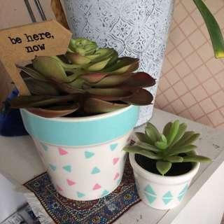 Typo Fake Succulent Plant X2
