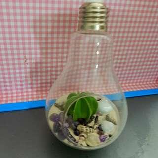 Unique Light bulb cactus