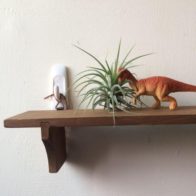 恐龍好朋友與空氣鳳梨