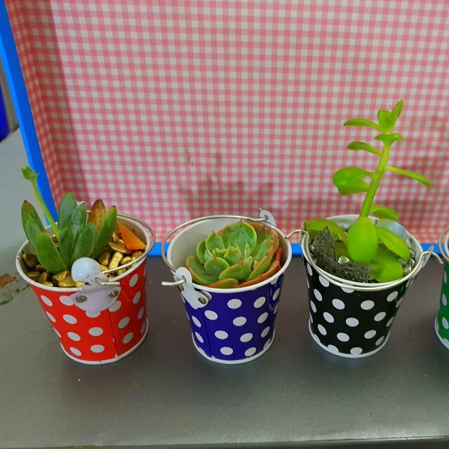 x4 unique succulents