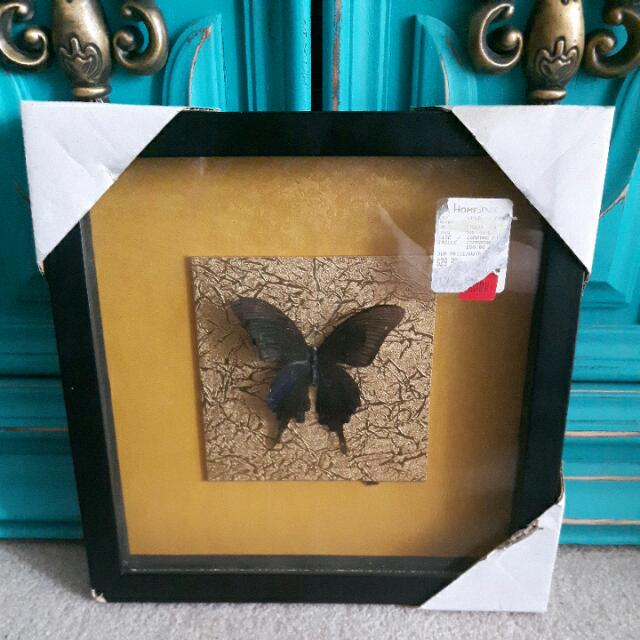Real Butterfly Shadow Box