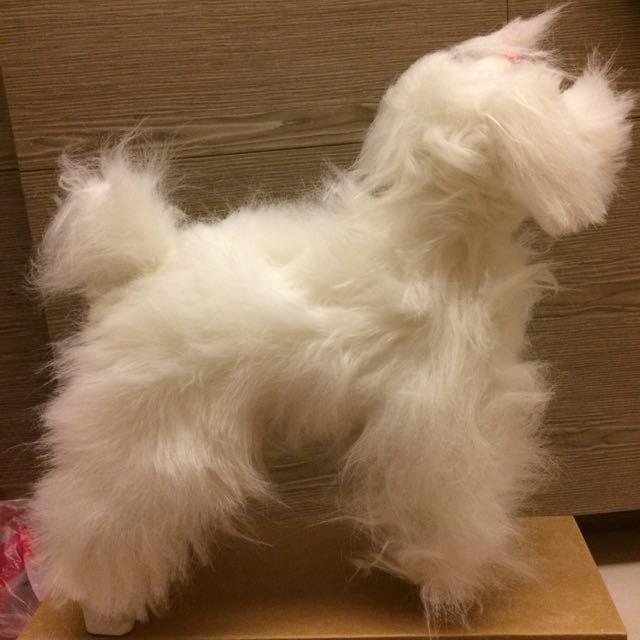 寵物美容 模型練習犬