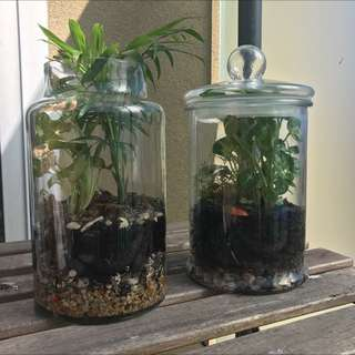 2 Large Terrariums