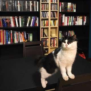 貓咪保姆 寄宿