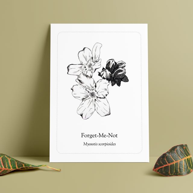 Forget Me Not Illustrated Study Print
