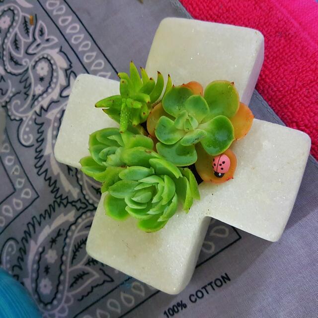 beautiful succulent cross