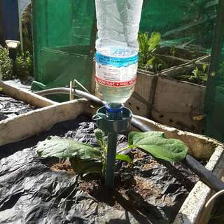 Self Watering Device While You Are Away For Up To 10 Days