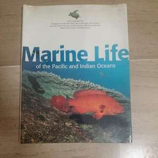 Marine Life of the Indo-Pacific Region - Diving