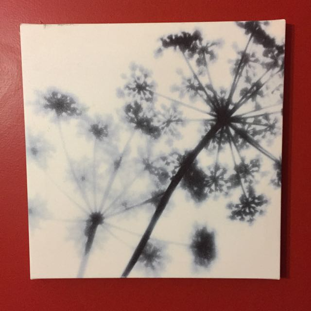 Black And White X-ray Flower Canvas Print