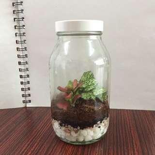 Scientific Bottle Terrarium