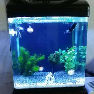 Fish Tank - DOES NOT COME WITH Overhead Filter. Led Light is provided.