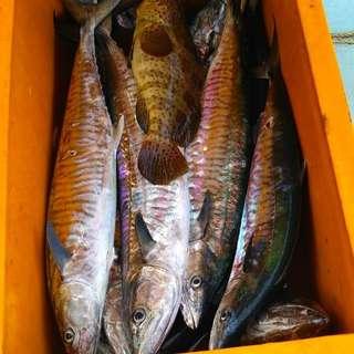 Kuching Yoko Boat