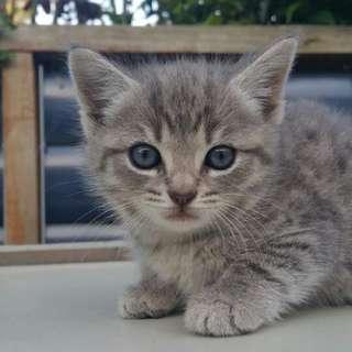 Kittens For FREE..!!