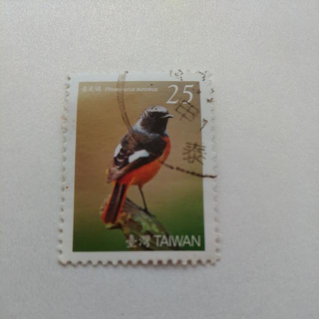 黃尾鳩 Phoeniaurus auroereus