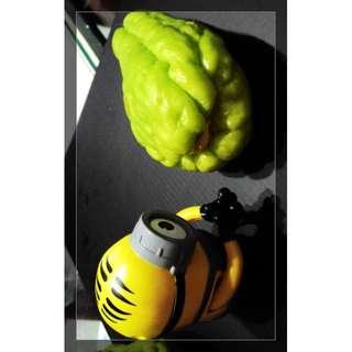 龍鬚菜種子(佛手瓜),一顆售30