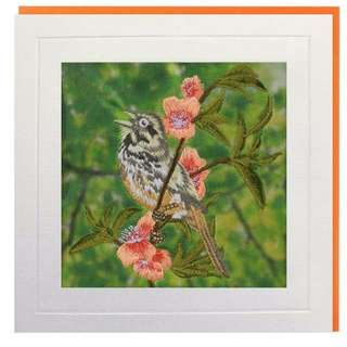 Honeyguide Greeting Card