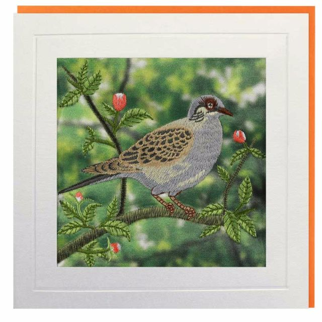 Turtle Dove Greeting Card