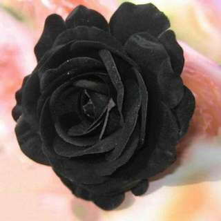 Rare Black mysterious rose seeds /plant
