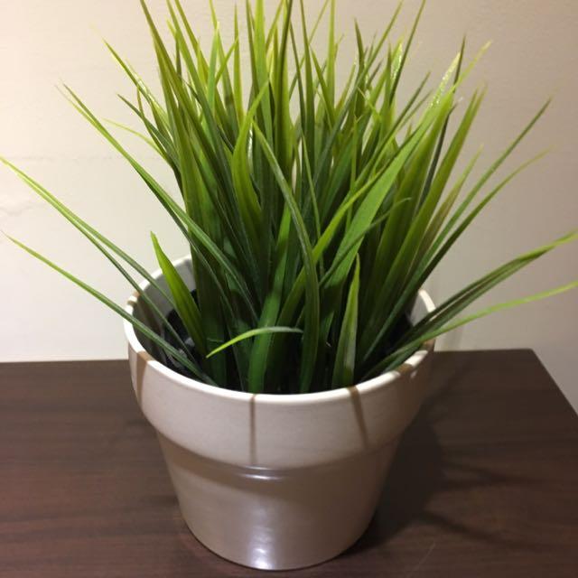 Green Vase 綠意盆栽