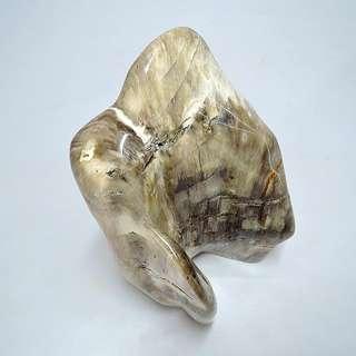 木化玉&木化石(32)