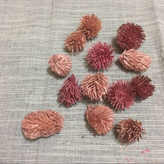 樂愛L'e Love 乾燥花材-進口日本大地農園仙人果(紫紅粉色