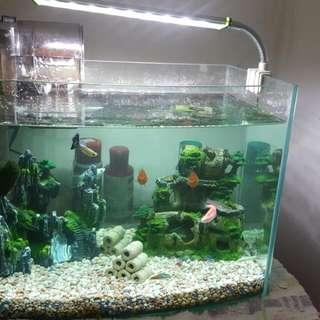 長35 寬23 高26 魚缸整組  (包刮魚) 濾水器  裝飾品 飼料 白點藥劑  LED燈