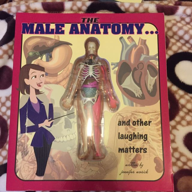 The Male Anatomy