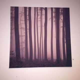 Dark Woods Canvas