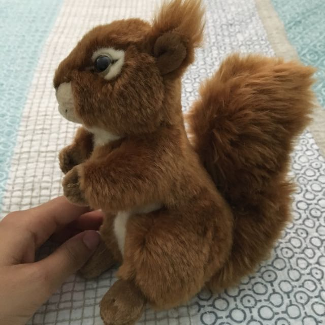 Red Squirrel Bought In Uk