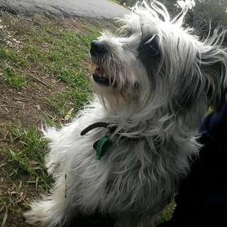 FREE Offering Dog Walking/Sitting