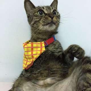 寵物小領巾/是賣單拍照片