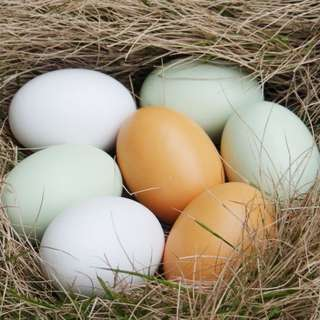 Unpainted Wooden Eggs – For Easter, Crafts, and Displays