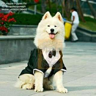 Formal Tux For Big Dogs