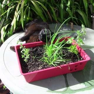 Cat Garden Box