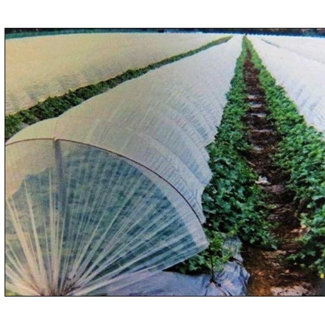 網室温室用品(農業用防寒膜、塑膠膜)厚0.06mm