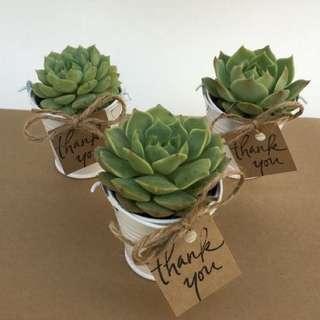 Succulent Party Favor/ Giveaway