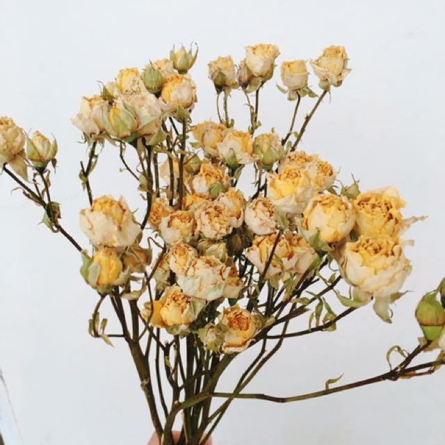 乾燥迷你黃玫瑰🌹
