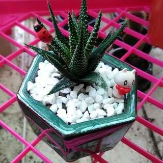仙人掌盆栽,迷你小盆景,陶瓷釉彩花盆
